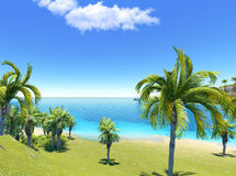 Beach and palms Royalty Free Stock Photo