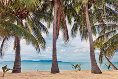 Beach with palms Royalty Free Stock Images