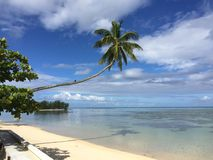 Beach, palms and island from Polynesia Stock Photos