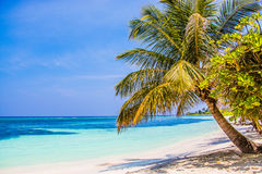 Beach Palms on Kuredu Stock Photo
