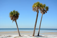 Beach Palms Stock Photos