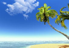 Beach, palms and sea Royalty Free Stock Image