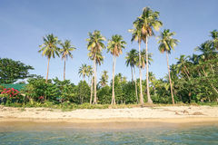 Beach palms from the sea at El Nido Palawan Stock Photos