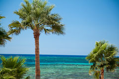 Beach palms Royalty Free Stock Images