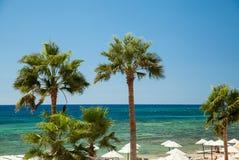 Beach palms Stock Photo
