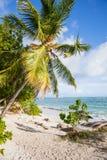 Beach with palms Stock Photos