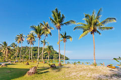 Beach with palms Royalty Free Stock Photo