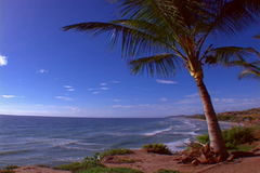 Beach with palmtree. Beautiful view of beach in the caribbean stock video footage