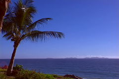 Beach with palmtree. Beautiful view of beach in the caribbean stock video
