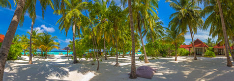 Beach panorama at Maldives. Under the palm trees Stock Image