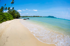 The beach panorama with palm trees Royalty Free Stock Photo
