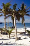 Beach Paradise. Palm trees on the beach at Isla Mujeres, Mexico Royalty Free Stock Photos