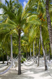 Beach Paradise Hammock under Palm Stock Photos