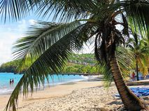Beach paradise. Palm tree Exotic Martinique Royalty Free Stock Image