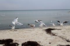 Beach party of gulls royalty free stock photos