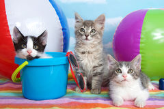 Beach party kittens. Three kittens laying on colorful striped beach towel with beach balls, shovel, pale, sun glasses blue sky background white fluffy clouds Royalty Free Stock Image