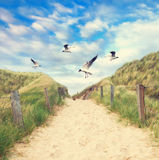 Beach path at north sea Royalty Free Stock Photo