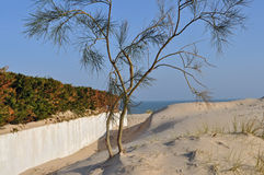 Beach path with tree Stock Photo