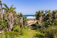 Beach Pathway Ocean Stock Photo