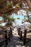 Beach pathway to rocky shoreline shaded with Pandanus Palm stock photos