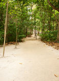 Beach Pathway through tropical forest Stock Photos