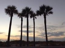 Palm trees on St. Pet's beach Stock Photo