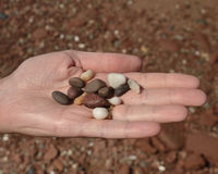 Beach pebbles. Prince Edward Island beach pebbles held in an open hand Stock Photography