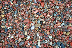 Beach pebbles background. A lot of coloured pebbles on a shore for a background of natural material Royalty Free Stock Images