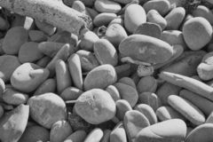 Beach Pebbles. And driftwood Stock Images
