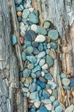 Beach pebbles and driftwood log, British Columbia, Canada. stock images