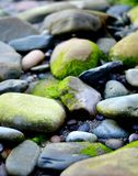 Beach pebbles and rockpools Royalty Free Stock Photo