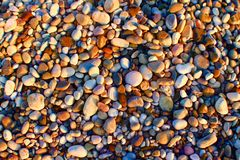 Beach pebbles in sunlight. Stock Photography