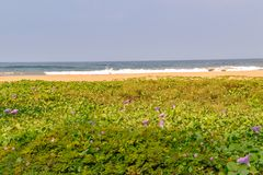 Beach pictures of Bentota in Sri Lanka royalty free stock photo