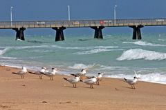 Beach with Pier and Birds. Beach on a sunny day with breaking waves, fishing pier, and seagulls Stock Photography