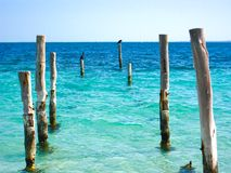 Beach Pier Posts with Birds. After a hurricane only the posts remain of a pier in Cancun. Two birds are perched on top Stock Images