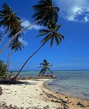 Beach, Pigeon point, Tobago. Stock Photos