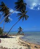 Beach, Pigeon point, Tobago. Stock Photos