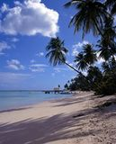 Beach, Pigeon point, Tobago. Royalty Free Stock Photos