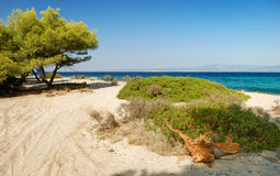 Beach with pines and bush Royalty Free Stock Photo