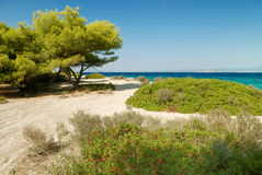 Beach with pines and bush Stock Photography