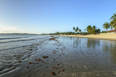 Beach of Pititinga at low tide (Brazil) Royalty Free Stock Image