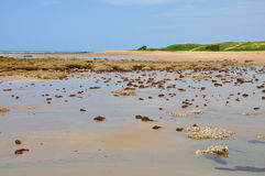 Beach of Pititinga, Natal (Brazil) Royalty Free Stock Photography