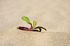 Beach plant Stock Image