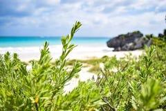 Beach playa Royalty Free Stock Image