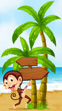 A beach with a playful monkey near the palm trees Stock Photo