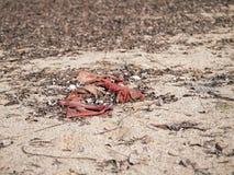 Beach pollution Royalty Free Stock Photo
