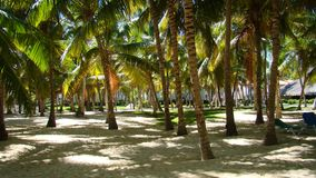 Beach at Punta Cana Stock Photography