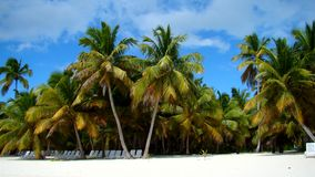 Beach at Punta Cana royalty free stock photos
