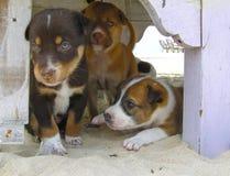 Beach Pups royalty free stock image