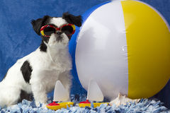 Beach puppy. Royalty Free Stock Photo